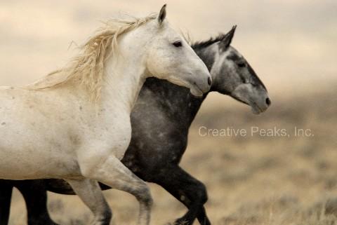 wildhorses006.jpg