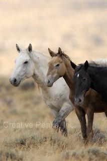 wildhorses002s.jpg