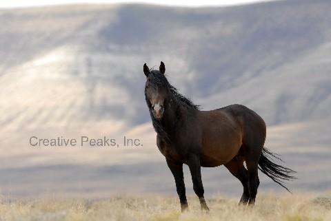 wildhorses010s.jpg