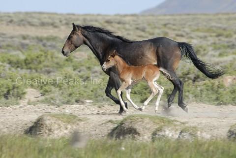 wildhorses013s.jpg
