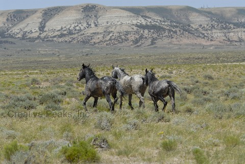 wildhorses015s.jpg