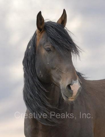 wildhorses021s.jpg